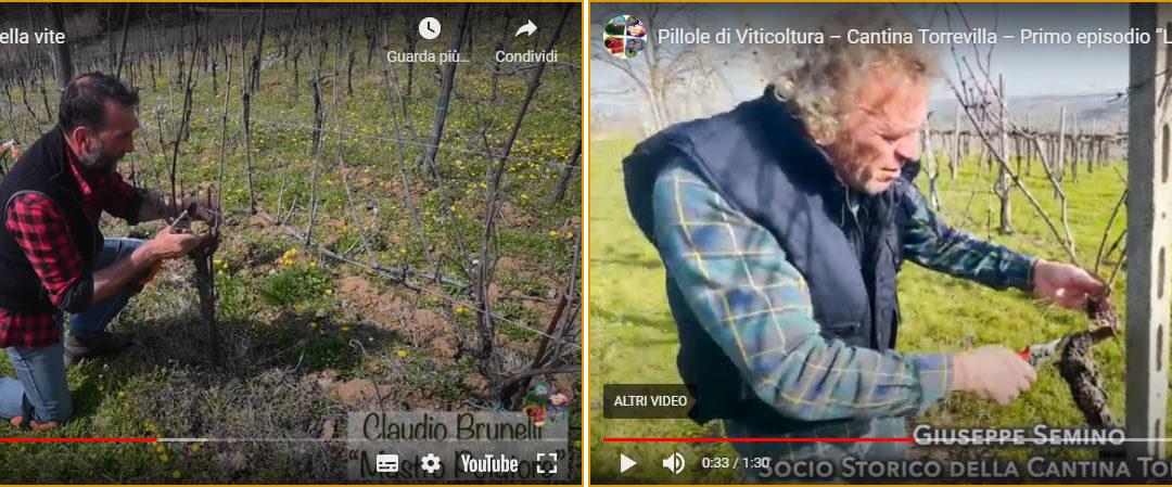 La potatura invernale del vigneto raccontata dai viticoltori dell'Oltrepò Pavese