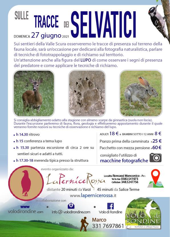 Sulle Tracce dei Selvatici e del Lupo in Oltrepò - Volo di Rondine