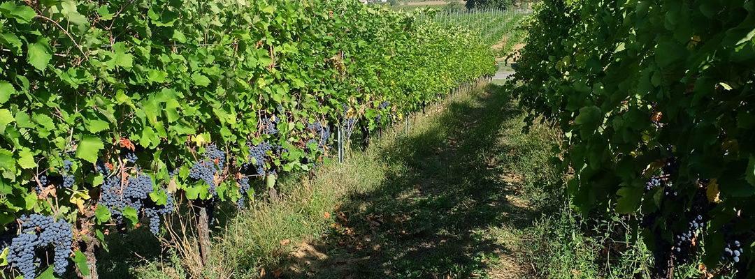 Weekend di settembre all'Agriturismo Circe della Cantina Picchi a Casteggio